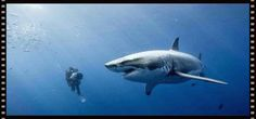Top 5 Shark Videos Of 2015 To Befriend You With The Toothsome Predators