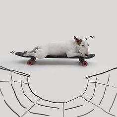 ilustraciones-interactivas-perro-jimmy-choo-rafael-mantesso (19)
