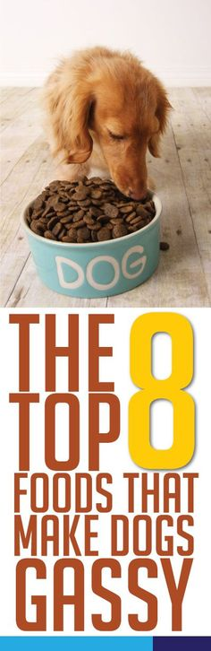 Um yah, you might want to avoid these! #dog #foods