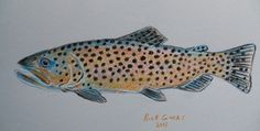 Brown Trout done in colored pencil