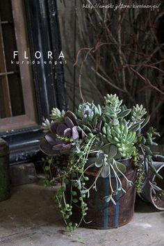 フローラのガーデニング・園芸作業日記-多肉植物 寄せ植え ペール缶