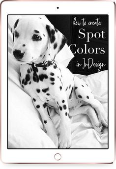 White PrintHow-To Print White Text. How To Create Spot Colors In InDesign Yugyeom, Youngjae, Got7, Cute Dogs Breeds, Dog Breeds, Jinyoung, Cute Baby Animals, Funny Animals, Australian Shepherd Puppies