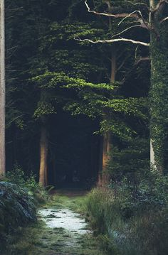 "{ ""These woods are lovely, dark, and deep."" }"