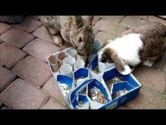 Beschäftigung Tiere, Kaninchen, Hasen