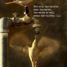 Rumi: Not only the thirsty seek the water, the water as well seeks the thirsty. - Rumi poet and Persian sufi mystic Rumi Love Quotes, Happy Quotes, Life Quotes, Positive Quotes, Rumi Poem, Jalaluddin Rumi, Fathers Day Quotes, Perspective On Life, Islamic World
