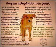 Animalista Amor Animal, Mundo Animal, Animals Of The World, Animals And Pets, Beautiful Words, Animals Beautiful, Dog Information, Street Dogs, Stop Animal Cruelty