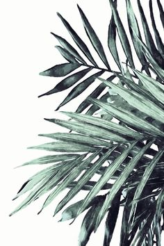 Palm Tree Leaves Pattern Tropical Leaf Prints Ideas For 2019 Leaves Wallpaper Iphone, Palm Leaf Wallpaper, Palm Tree Leaves, Tropical Leaves, Galaxy Painting, Palm Tree Print, Tree Wall Art, Watercolor Print, Watercolor Background