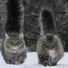 Winter is Coming Click here for more adorable animal pics!