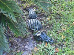 Alligator Garden Statue 3 pc Daddy Alligator Statue / Yard Art/Garden Stone RTS