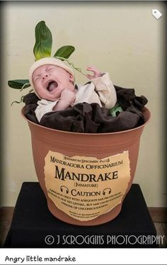 41 ideas for baby announcement halloween harry potter Baby Harry Potter, Harry Potter Nursery, Harry Potter Baby Shower, Harry Potter Baby Costume, Newborn Halloween Costumes, Baby Costumes, Costume Halloween, Adornos Halloween, Halloween Disfraces