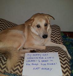 Ober peinlich ! Animal Humor, Animal Memes, Funny Animal Pictures, Funny Animals, Poor Dog, Dog Cat, Lol, Babies, Pets