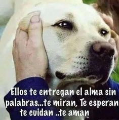 #amor #eterno #lealtad