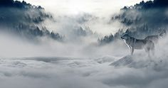 Wolf, Wolves, Snow Wolf, Landscape