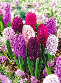 100 Best Names Of Spring Flowers Images Spring Flowers Beautiful