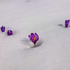 Spring is coming Spring Is Coming, Beautiful Flowers, Stud Earrings, Snow, Green, Self, Stud Earring, Earring Studs, Eyes