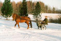 Maaseutu ja hevoset. Kaksi asia, jota mä rakastan!