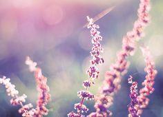 mam wielką słabość do takich zdjęć. :)lubię to, że pozornie zwykle rzeczywyglądają przez obiektyw niesamowicie. :)