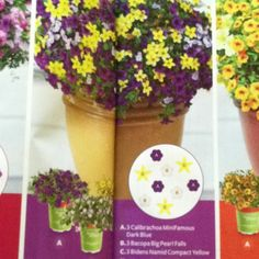 """3 calibrachoa minifamous dark blue, 3 bacopa big pearl falls, 3 bidens namid compact yellow in a 16-20"""" container (Better Homes and Gardens magazine May 2012)"""