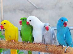 colorful, parrots, tropic