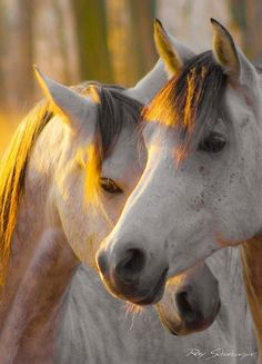 Horse Love || dappled grey horse |