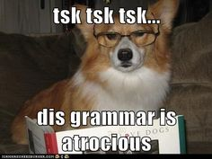 Corgis and grammar together: what could be better?