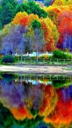 #TREE##NATURE# #AMAZING#
