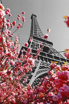 Aniversario Torre Eiffel | Global Harmony Deco