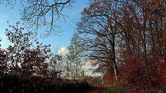 Vorhin gab`s noch blauen Himmel.  ... Also bei uns hier. Da lohnte sich eine Waldrunde. Jetzt wird`s langsam grau. Zeit die Laternen für St. Martin rauszuholen. :-)