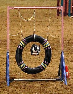 DIY dog  Agility course. Lists all the materials needed to make each obstacle