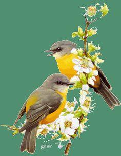 Animated Gif by Beautiful Gif, Beautiful Birds, Pretty Birds, Love Birds, Vogel Gif, Animals And Pets, Cute Animals, Bird Gif, Flowers Gif