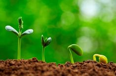 I often refer to soil temperature and day to germination data when planning when to start vegetable seeds for the new season. Photoshop, Plantar, Plant Needs, Seed Starting, Kids Health, Growing Plants, Big Plants, Nature Photography, Landscape