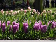 Expert tips for how to integrate bulbs into your garden design