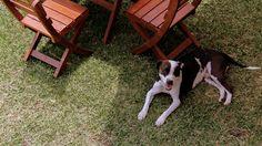 Petfriendly :) #PosadadeSanCarlos #Charro #PetFriendly #HeLovesSanCarlos Charro, Central Park, Dogs, Animals, San Carlos, Animales, Animaux, Pet Dogs, Doggies