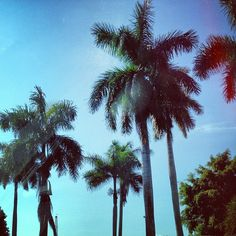 Palm trees = Paradise. @Kijafa Carter 's Fav www.moneyteammag.com