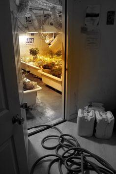 #marijuana grow room details http://www.growingmarijuanaebook.com/
