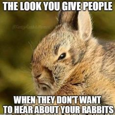 Bunny Memes Just For The Rabbit Parents – Paula Cappuccio - Baby Animals Funny Animal Quotes, Animal Jokes, Funny Animals, Cute Animals, Rabbit Jokes, Funny Rabbit, Pet Bunny Rabbits, Pet Rabbit, House Rabbit