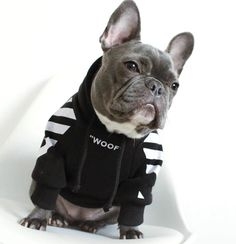 French Bulldog Clothes Dog Hoodie Adidog Give you little friend a cool look with these ADIDOG sport suits. French Bulldog Clothes, French Bulldog Puppies, Funny French Bulldogs, French Bulldog Costume, Merle French Bulldog, French Bulldog Blue, Small Dog Clothes, Puppy Clothes, Pet Dogs