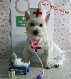 Get well soon♡ We had a westie we dubbed nurse Wright. She would lay on our chest when we were sick.