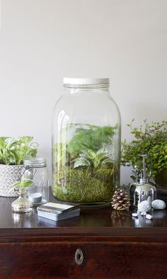 Kasviterraariot ovat trendikkäitä ja helppohoitoisia. Istuta viherkasveista inspiroiva asetelma lasipurkkiin – ja unohda kastelu.