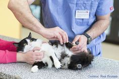 Pooh the Amputee Cat Gets New Legs and a Second Chance