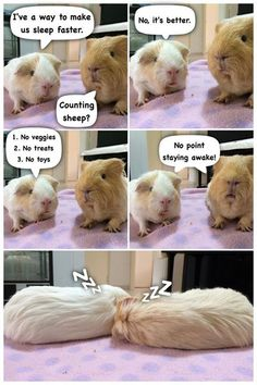 guinea pig philosophy =D This is for real what my guinea pig is probably thinking