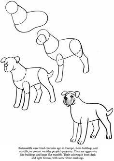 How to draw Bullmastiffs