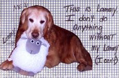 Dog loves his lammy!