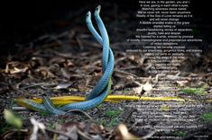 Snake In The Grass, Never Change, Thoughts, Shit Happens, Love, Eyes, Garden, Amor, Garten