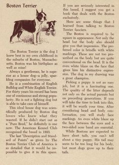 Boston Terrier - History