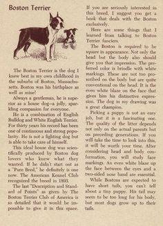 Boston Terrier - History