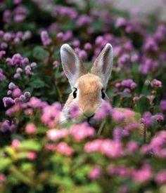 bunny ears in purple field