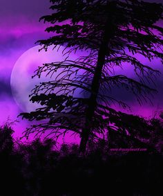 Mystic Night created in Photoshop by Tracey Everington of Tracey Lee Art Designs The Real World, Art Designs, Mystic, Northern Lights, Trees, Photoshop, Wallpapers, Night, Purple
