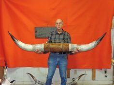 1491 Steer Horns 6 ft 3 in Mounted Bull Horns Cow Texas Longhorn Taxidermy | eBay
