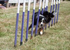 1000 Images About Agility On Pinterest San Diego